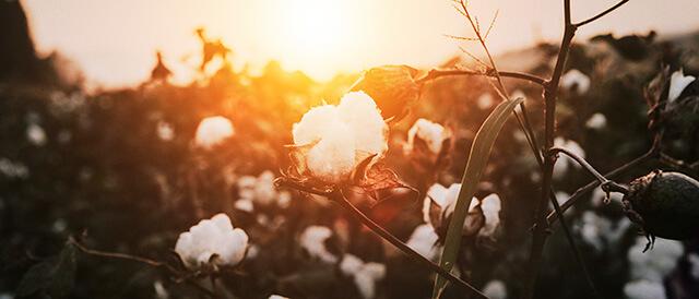 Eco-friendly Cotton